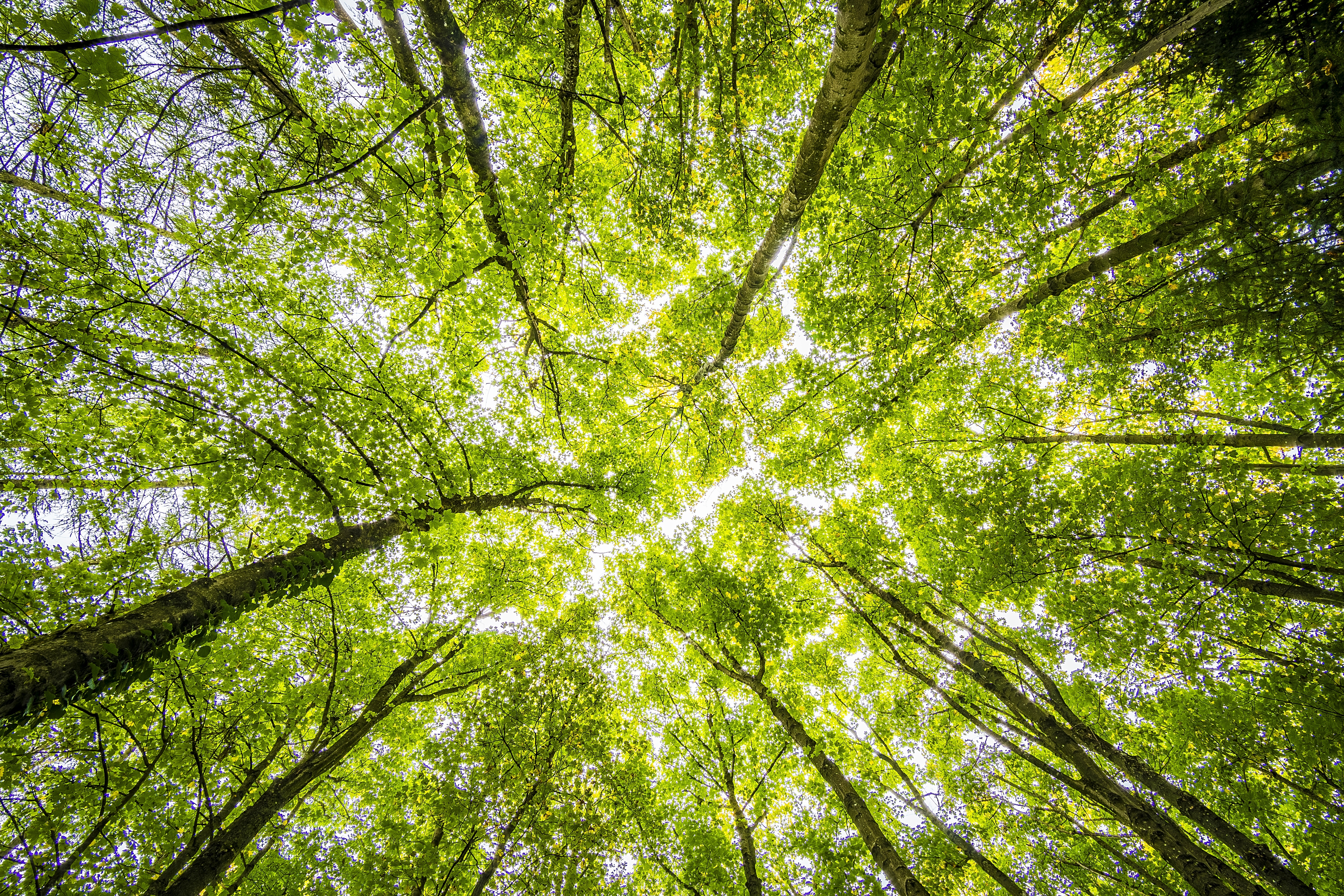 worms-eyeview-of-green-trees-957024